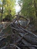 Erforschung der Landschaft während einer kamloops Wildniswanderung Lizenzfreie Stockfotos