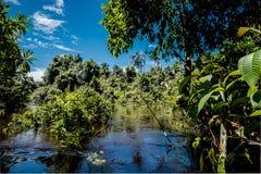 Erforschung des Amazonas-Dschungels stockfotos