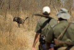 Erforschung des Busches Lizenzfreies Stockfoto