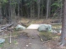 Erforschung einer schönen szenischen Waldseespur Stockfoto