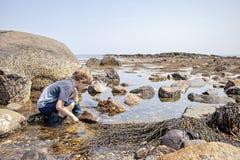 Erforschungsgezeitenpools des Jungen auf New Hampshire-Küste stockfotos