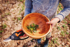 Erforschungsnatur des Kindermädchens im Vorfrühlingswald scherzt das Lernen, Natur zu lieben Unterrichtende Kinder über das Jahre Lizenzfreie Stockfotografie