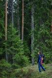 Erforschungswald des Wanderers, karelischer Kiefernwald, Skandinavien stockfotos