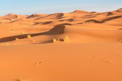 Erg αμμόλοφοι άμμου Chebbi κοντά σε Merzouga, Μαρόκο Στοκ Εικόνες