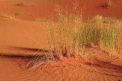 Erg Chebbi Royalty Free Stock Image