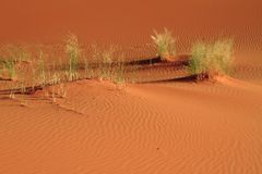 Erg Chebbi Royalty Free Stock Photography