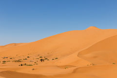 Erg Chebbi, Morocco Royalty Free Stock Images