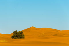 Erg chebbi Royalty Free Stock Images