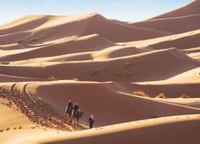 Erg Chebbi sand dunes in the Sahara Desert near Merzouga at early sunny morning, Morocco.  Berber male  guide in traditional dress. Leading  two tourists on Royalty Free Stock Photos