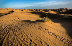 Erg Chebbi tracks. Erg Chebbi is one of Morocco's two Saharan ergs – large dunes formed by wind-blown sand –. The other is Erg Chigaga near M'hamid. Its Royalty Free Stock Image