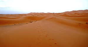 The dawn of a new day in the desert dunes of ERG in Morocco. Erg Morocco Desert Erg Chebbi in Arabic: عرق الشبي is one of two ergs groups of large dunes Royalty Free Stock Photo