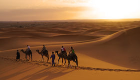 Walk in the ERG desert in Morocco. Erg Morocco Some tourists riding dromedaries for a walk in dawn Desert Erg Chebbi in Arabic: عرق الشبي is one of two Royalty Free Stock Photo