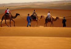 Walk in the ERG desert in Morocco. Erg Morocco Some tourists riding dromedaries for a walk in dawn Desert Erg Chebbi in Arabic royalty free stock photo