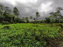 Ergens in Amazonië royalty-vrije stock afbeelding
