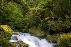 Ergens in Nieuw Zeeland Stock Afbeeldingen