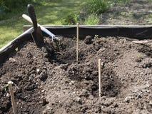 Erhöhte hölzerne Gemüsebetten Gartenarbeitausrüstung für Hauptgärtner Stockfotografie