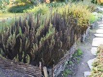 Erhöhte Weidengemüsebetten Gartenarbeitausrüstung für Hauptgärtner Lizenzfreie Stockfotos