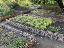 Erhöhte Weidengemüsebetten Gartenarbeitausrüstung für Hauptgärtner Stockfotos
