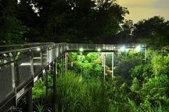 Erhöhter beleuchteter Gehweg mit bewaldetem Hintergrund Stockfotografie