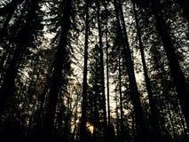 Erhalten Sie nicht in einem Wald verloren lizenzfreie stockfotos