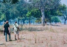 Erhaltungsoffizier und -photograph sieben afrikanische wilde Hunde in Simbabwe, Südafrika stockfotografie