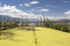 Erhau lake in summer ,Dali ,Yunnan China Stock Photo