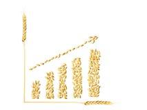 Erhöhen Sie ein Getreide des Weizens Stockfoto