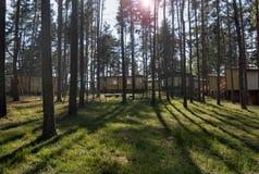 Erholungsstätte im Kiefernwald Stockfotografie