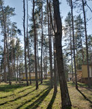 Erholungsstätte im Kiefernwald Stockfotos