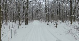Аerial view of winter forest among snow-covered trees at winter day stock video footage