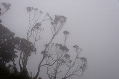Erica στα βουνά ruwenzori, Ουγκάντα Στοκ εικόνες με δικαίωμα ελεύθερης χρήσης