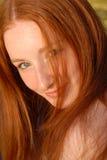Erica Fotografie Stock Libere da Diritti