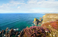 Erica delle scogliere del mare della Cornovaglia di paesaggio Fotografia Stock Libera da Diritti