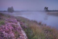 Erica di fioritura lungo un lago all'alba Immagine Stock Libera da Diritti