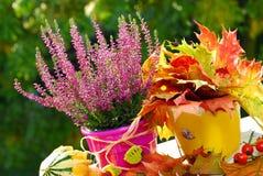 Erica nel giardino di autunno Fotografia Stock