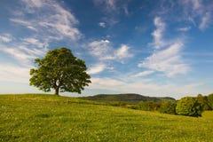 Erinnerungsahornbaum auf dem mystischen Platz in Votice Lizenzfreie Stockfotos