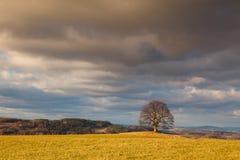 Erinnerungsahornbaum auf dem mystischen Platz in Votice, Tscheche Republi Lizenzfreie Stockbilder