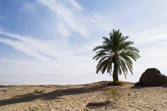 Erinnerungspalme bei Yotvata in Israel stockbilder