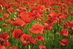 Erinnerungstag, Anzac Day, Ruhe stockbild