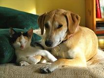 Eris y Dafne, animales domésticos adorables imagen de archivo