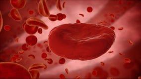 Eritrocito, glóbulos rojos, concepto médico de la anatomía Foto de archivo libre de regalías