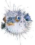 Erizo de los pescados Ejemplo de la acuarela del erizo de los pescados Palabra subacuática Fotografía de archivo libre de regalías