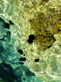 Erizo de mar Imagen de archivo