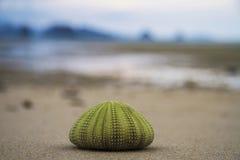 Erizo de mar de Marco foto de archivo libre de regalías