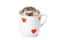 Erizo que oculta en una taza adornada con los corazones rojos Foto de archivo libre de regalías