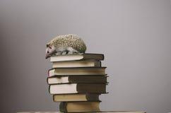 Erizo que se sienta en el top de libros Imagenes de archivo