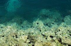 Erizos de mar Fotos de archivo libres de regalías