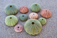 Erizos de mar coloridos en la playa Fotografía de archivo