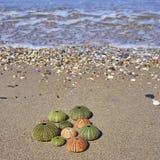 Erizos de mar coloridos en la playa Imágenes de archivo libres de regalías