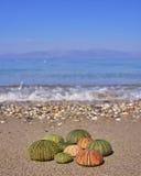Erizos de mar coloridos en la playa Imagenes de archivo